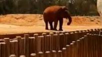 Bé gái tử vong vì bị voi ném đá trúng đầu