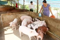 Nhiều chương trình, dự án về với người Khmer làm thay đổi các phum sóc