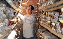 Quảng Ngãi: Thành lập mới 5 câu lạc bộ nông dân giỏi