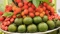 Cơ hội mua nông sản thực phẩm an toàn và đặc sản Nam Bộ tại Hà Nội