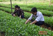 Phát triển rừng trồng gắn với công nghiệp chế biến gỗ