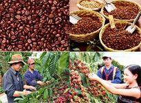 Kon Tum cần đẩy mạnh tái cơ cấu nông nghiệp
