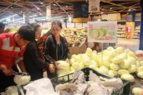 Lotte Mart giúp nông dân Lâm Đồng tiêu thụ bắp cải