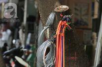 Ngàn lẻ một công dụng kỳ quặc dùng cây xanh, biển báo... để bán hàng chỉ có ở phố cổ Hà Nội