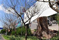 Nghi án đầu độc cây xanh thành phố