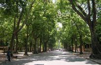 Những con đường xanh