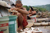Đã có kết luận về hiện tượng cá do dân nuôi chết đầy trên sông Mã