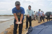 Khánh Hòa: Thu mua tạm trữ muối không minh bạch