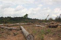 Bình Phước: Hàng trăm hécta rừng bị chặt, vì bị coi là 'nghèo kiệt'