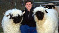 Cừu dễ thương nhất thế giới