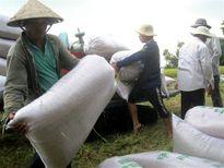 VCCI Cần Thơ: Nông nghiệp không lụi tàn, nhưng khó đưa kinh tế phát triển