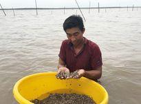Điều tra vụ trộm sò huyết ven biển Cà Mau