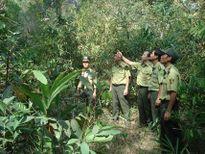 Kon Tum quyết liệt đóng cửa rừng tự nhiên