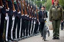 Chuyện lạ: Chim cánh cụt được phong Chuẩn tướng