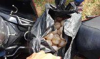 Đủ căn cứ khởi tố đối tượng trộm 116 trứng vích tại Côn Đảo