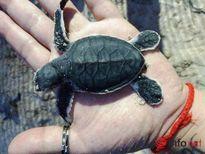 Rùa con và hành trình trưởng thành khắc nghiệt