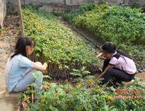 Hỗ trợ 1,9 tỷ đồng giống cây trồng rừng nguyên liệu