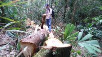 Họp báo phá rừng pơ mu ở Quảng Nam: Khởi tố 9 đối tượng