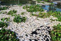 Đồng Tháp: Công bố 4 nguyên nhân cá chết trắng sông Cái Vừng
