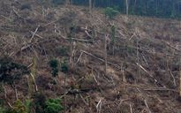 Mỗi ngày có một vụ phá rừng tại miền Trung