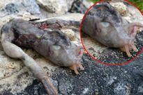 Tìm thấy sinh vật nhầy nhụa với 2 chân kì dị ở Na Uy