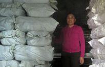 Sự cố cá biển chất hàng loạt: Cơ sở thu mua, chế biến cùng lao đao