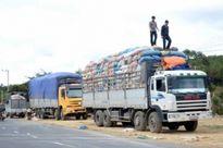 Bắc Ninh: Hơn 900 xe ô tô đã bị lập biên bản vì chở hàng quá trọng tải