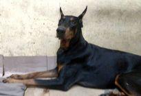 Những chú chó bị đối xử tàn tệ được bạn trẻ giải cứu