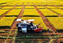 Cần thêm 96.000 tỷ đồng để phục vụ tái cơ cấu ngành nông nghiệp