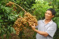 Nhãn VietGap Hưng Yên sẽ có mặt trên siêu thị toàn quốc