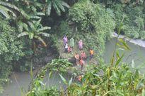 Đã tìm thấy thi thể du khách bị nước cuốn trôi ở Lâm Đồng