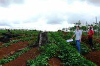 Giải quyết vụ ẩu đả ở Đắk Song: Cần đảm bảo khách quan, công bằng