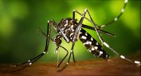 Tìm ra vắc xin chống virus Zika