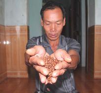 Cà phê Khe Sanh trở lại đường đua (2)