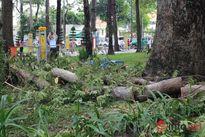 Đi tập thể dục, bị nhánh cây ở công viên Tao Đàn rơi trúng tử vong