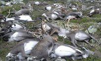Lí giải nguyên nhân hơn 300 con tuần lộc bị sét đánh chết đồng loạt
