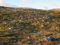 Na Uy: 323 con tuần lộc chết tập thể vì bị sét đánh