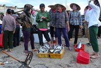 4 tháng sau sự cố Formosa, ngư dân vẫn gác mái chèo