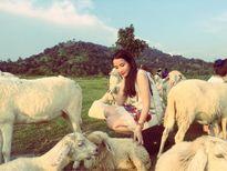 Có một 'cánh đồng cừu' đẹp như mơ cách Sài Gòn chỉ 2 tiếng chạy xe