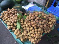 Quảng Ninh: Phát hiện nhãn, hồng nhập lậu từ Trung Quốc