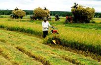 Doanh nghiệp loay hoay trong 'trận đồ' nông nghiệp