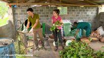 Làm giàu nông nghiệp nhờ nuôi vịt trời 'đẻ' 15 tỷ mỗi năm