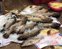 Khẩn trương xác định nguyên nhân cá chết tại Nghi Sơn