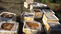 Hãi hùng phát hiện 500kg nhộng tằm hôi thối trên xe khách