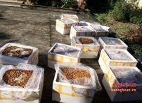 Nghệ An: Bắt giữ hơn 500 kg nhộng tằm bốc mùi