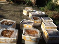 Phát hiện vận chuyển hơn 500 kg nhộng tằm đang phân hủy