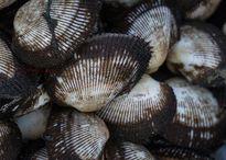 Móng Cái: Bắt giữ gần 1,7 tấn thủy, hải sản đông lạnh nhập lậu