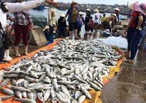 Bộ TN&MT lập tổ kiểm tra vụ cá chết bất thường ở Thanh Hóa