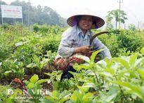 Nông dân tự lập cộng đồng sản xuất nông sản sạch