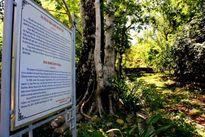 Hoang tàn di tích lịch sử 'biệt thự' của em trai Ngô Đình Diệm
